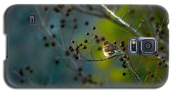 Sparrow In The Warm Light Galaxy S5 Case by Shelby  Young