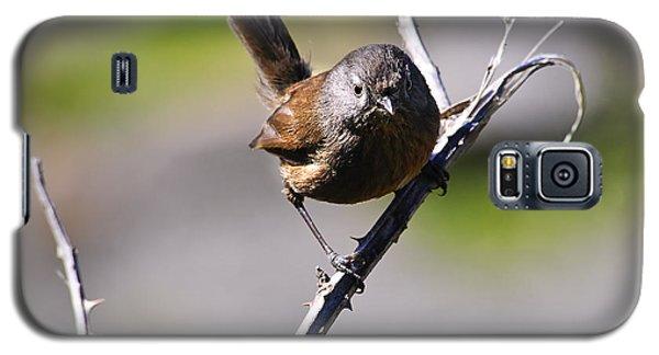 Sparrow On A Branch Galaxy S5 Case