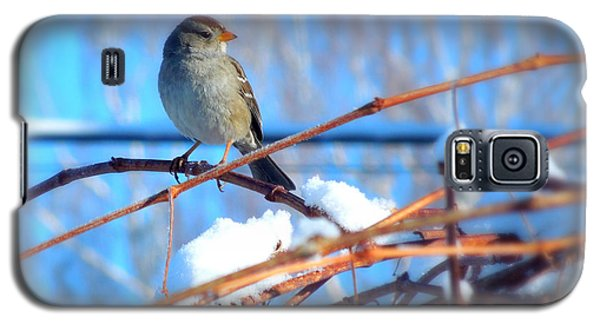 Galaxy S5 Case featuring the photograph Sparrow On Grapevine by Heidi Manly
