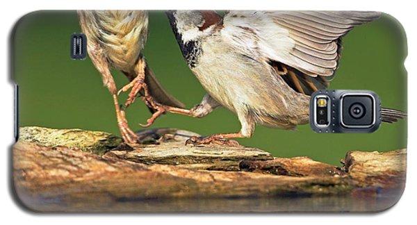 Sparrows Fighting Galaxy S5 Case by Bildagentur-online/mcphoto-schaef