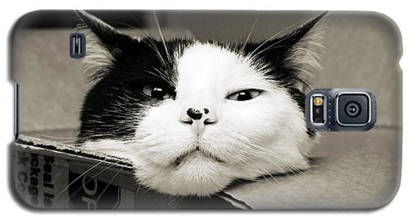 Special Delivery It's Pepper The Cat  Galaxy S5 Case