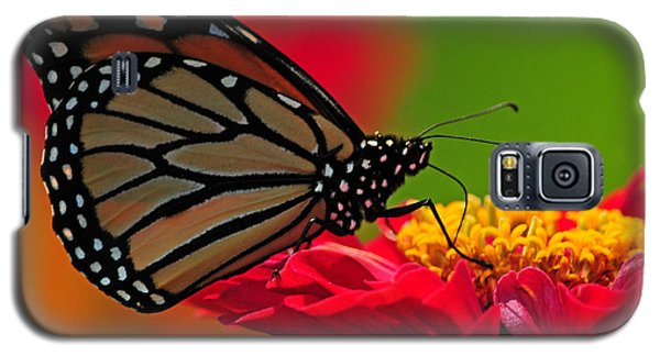 Galaxy S5 Case featuring the photograph Speckled Monarch by Olivia Hardwicke