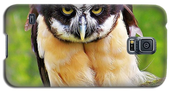 Spectacle Owl Galaxy S5 Case