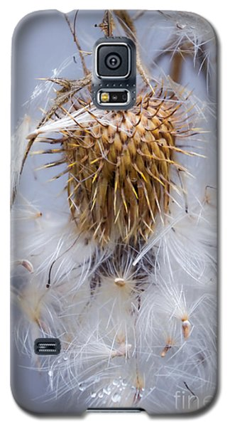 Spent Thistle Galaxy S5 Case by Adria Trail