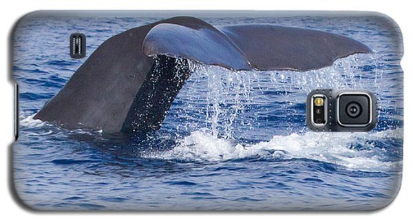 Sperm Whale Tail Galaxy S5 Case
