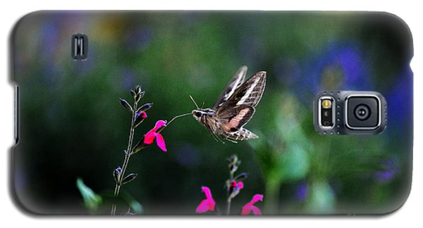 Sphinx Moth And Summer Flowers Galaxy S5 Case by Karen Slagle