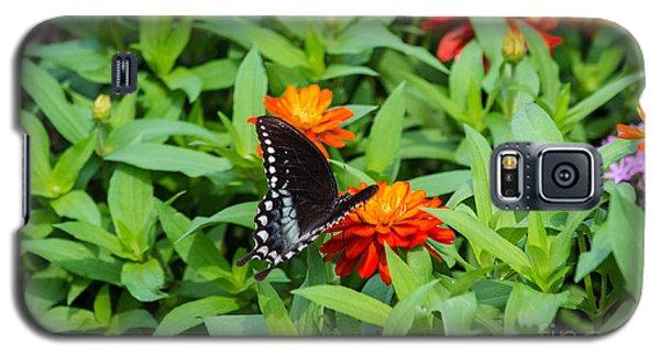 Spicebush Swallowtail Galaxy S5 Case by Angela DeFrias
