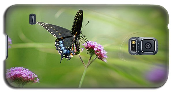 Spicebush Swallowtail Butterfly Galaxy S5 Case