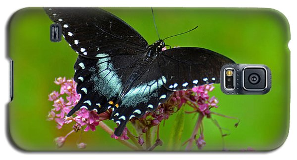 Galaxy S5 Case featuring the photograph Spicebush Swallowtail by Rodney Campbell