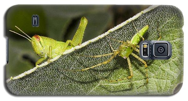 Spider-grasshopper Standoff Galaxy S5 Case