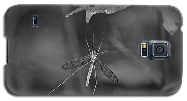 Galaxy S5 Case featuring the photograph Spider Ins 83 by G L Sarti