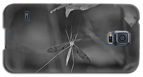 Spider Ins 83 Galaxy S5 Case