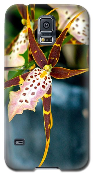 Galaxy S5 Case featuring the photograph Spider Orchid by Lehua Pekelo-Stearns