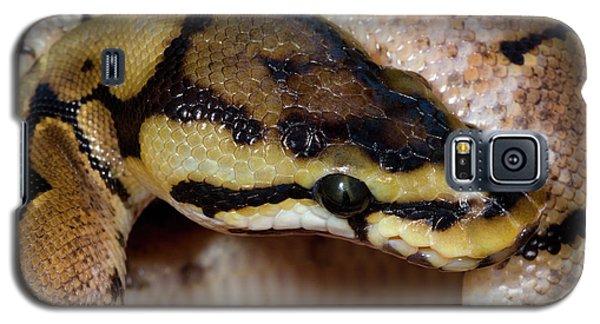 Spider Royal Python Galaxy S5 Case