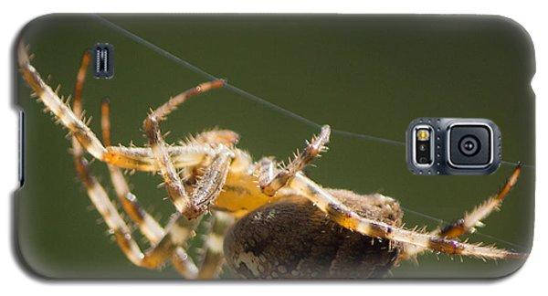 Spider Galaxy S5 Case