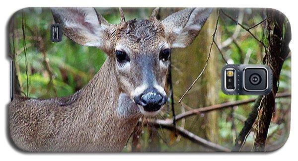 Spike Buck Whitetail Portrait Galaxy S5 Case by Chris Mercer