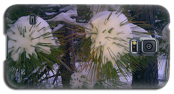 Galaxy S5 Case featuring the photograph Spiny Snow Balls by Chris Tarpening