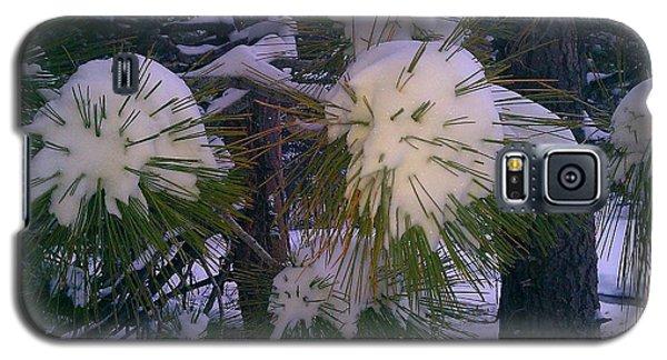 Spiny Snow Balls Galaxy S5 Case by Chris Tarpening