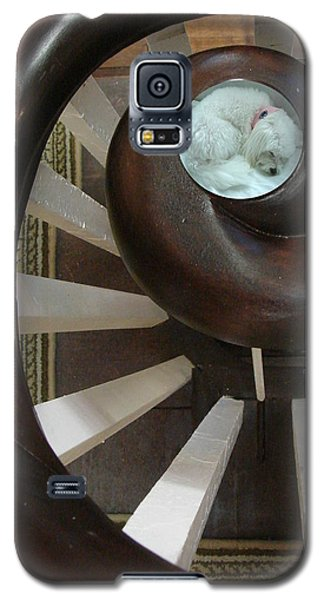 Galaxy S5 Case featuring the photograph Spiral Railing And Puppy by Mary Beth Landis