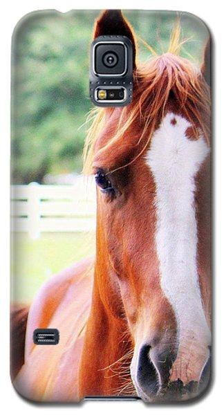 Spirits Galaxy S5 Case