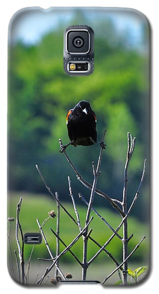 Galaxy S5 Case featuring the photograph Splits by Adam Olsen