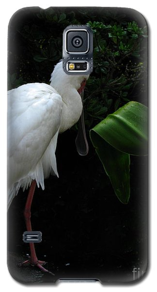 Spoonbill Morning Galaxy S5 Case by Greg Patzer