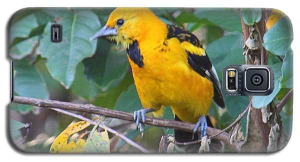Spot-breasted Oriole Teenager Galaxy S5 Case