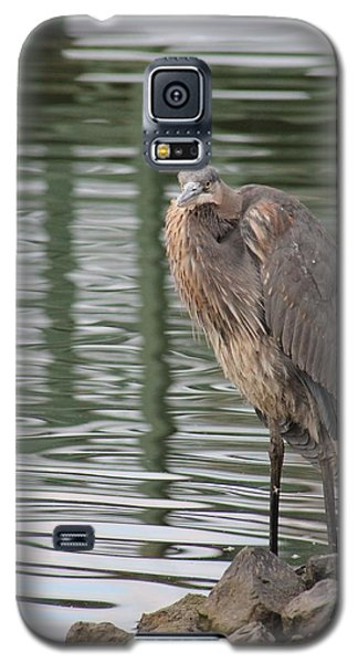 Spotted By A Great Blue Heron Galaxy S5 Case by Robert Banach