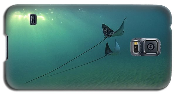 Spotted Eagle Rays During Sunset Galaxy S5 Case