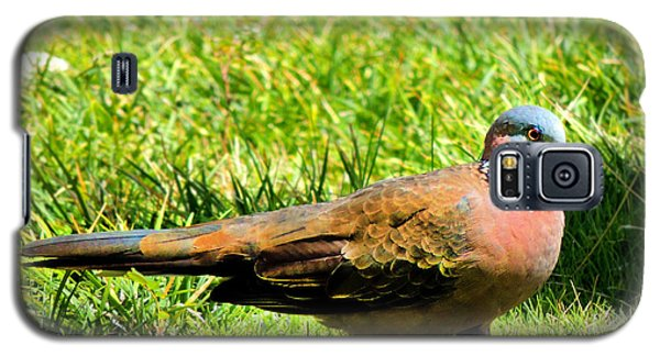 Galaxy S5 Case featuring the photograph Spotted Nape Dove by Kristine Merc