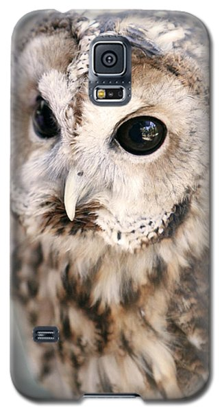 Galaxy S5 Case featuring the photograph Spotted Owl by Shoal Hollingsworth