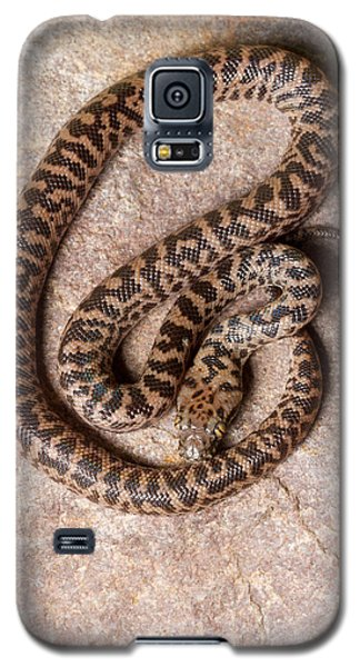 Galaxy S5 Case featuring the photograph Spotted Python Antaresia Maculosa Top by David Kenny