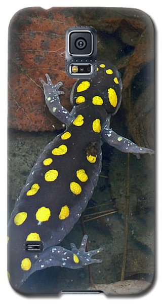 Spotted Salamander Galaxy S5 Case by Christina Rollo