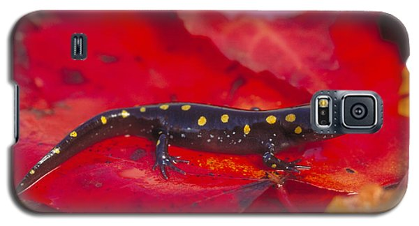 Spotted Salamander Galaxy S5 Case by Paul J. Fusco