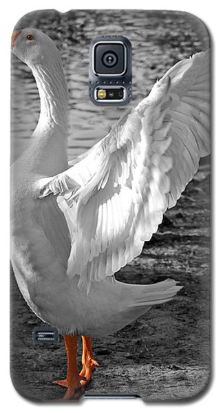 Spread Your Wings B And W Galaxy S5 Case by Lisa Phillips