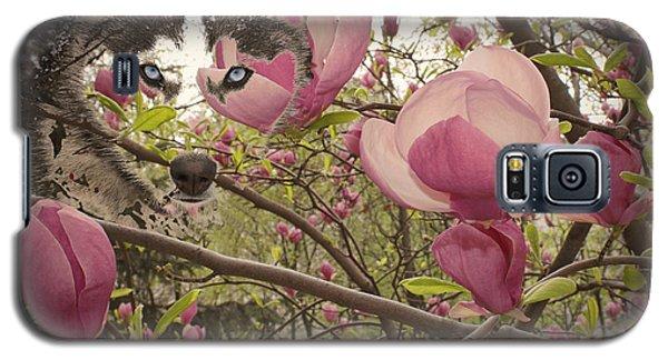 Spring And Beauty Galaxy S5 Case by Georgeta Blanaru