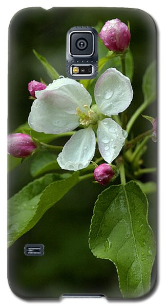 Spring Apple Blossom Encircled By Pink Buds Galaxy S5 Case
