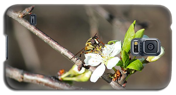 Spring Bee On Apple Tree Blossom Galaxy S5 Case