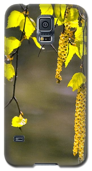 Spring Birch Buds Paint Galaxy S5 Case