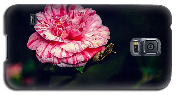 Spring Bloom In Portugal Galaxy S5 Case by Marion McCristall
