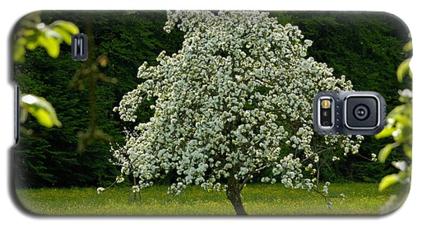 Spring - Blooming Apple Tree And Green Meadow Galaxy S5 Case