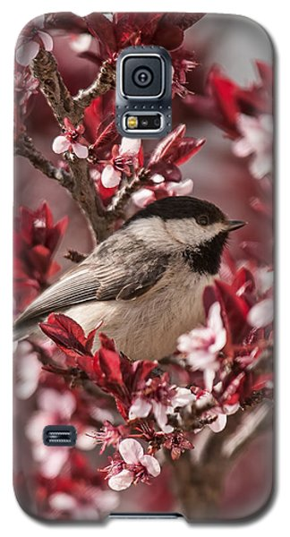 Spring Blossom Chickadee Galaxy S5 Case