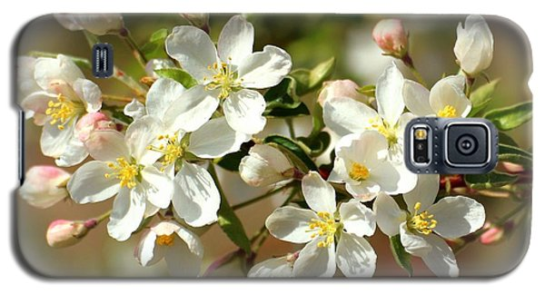 Galaxy S5 Case featuring the photograph Spring Blossoms 2 by Lynn Hopwood