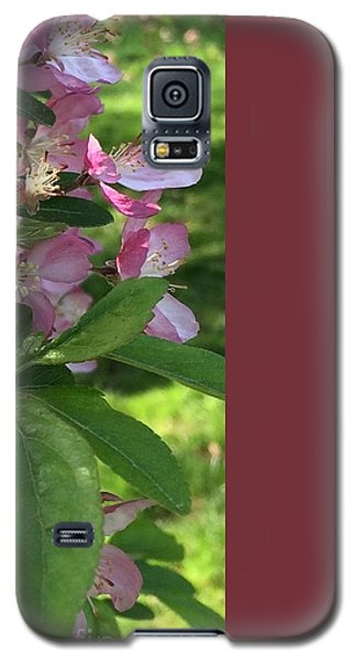 Spring Blossoms - Flower Photography Galaxy S5 Case by Miriam Danar