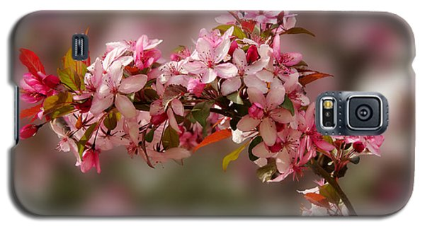 Cheery Cherry Blossoms Galaxy S5 Case