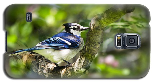 Spring Blue Jay Galaxy S5 Case by Christina Rollo