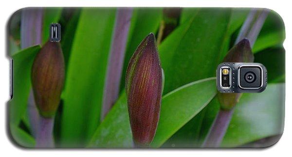 Spring Buds Amaryllis Galaxy S5 Case