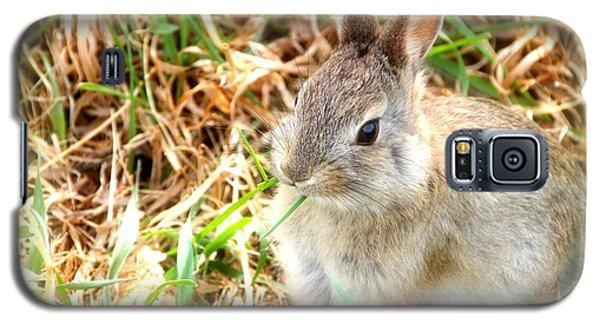 Spring Bunny Galaxy S5 Case