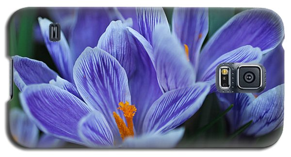 Galaxy S5 Case featuring the photograph Spring Crocus by Julie Andel