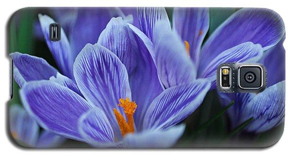 Spring Crocus Galaxy S5 Case by Julie Andel
